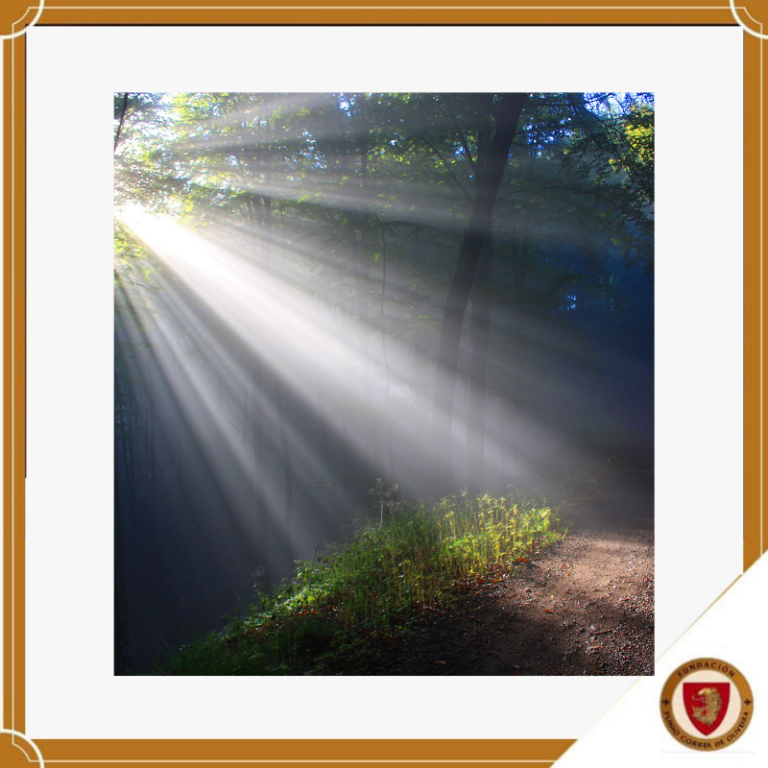 Luz, el mayor regalo